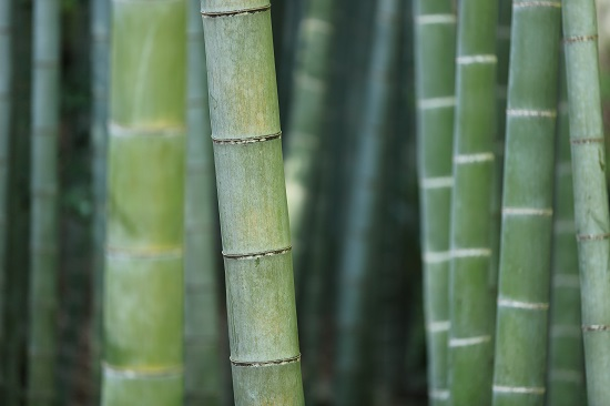 Bamboo sustainable material